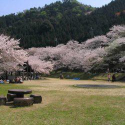 阪南市鳥取池緑地・桜の園