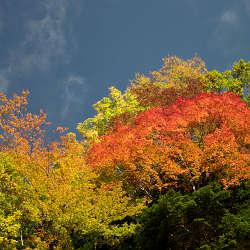 高野山~龍神スカイラインの紅葉