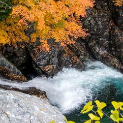 天の川の紅葉